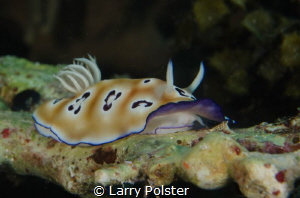 Beautiful Nudi with mantel up by Larry Polster